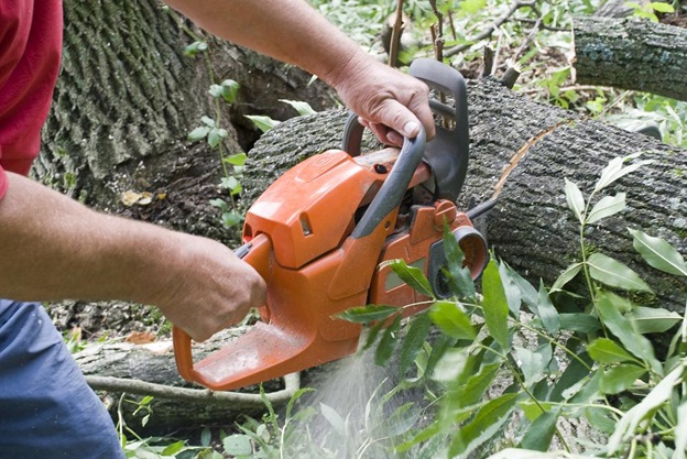 Why You Should Hire Professional Tree Removal Service Providers