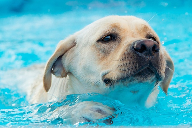 How Can A Hydrotherapy Pool Help Dogs?